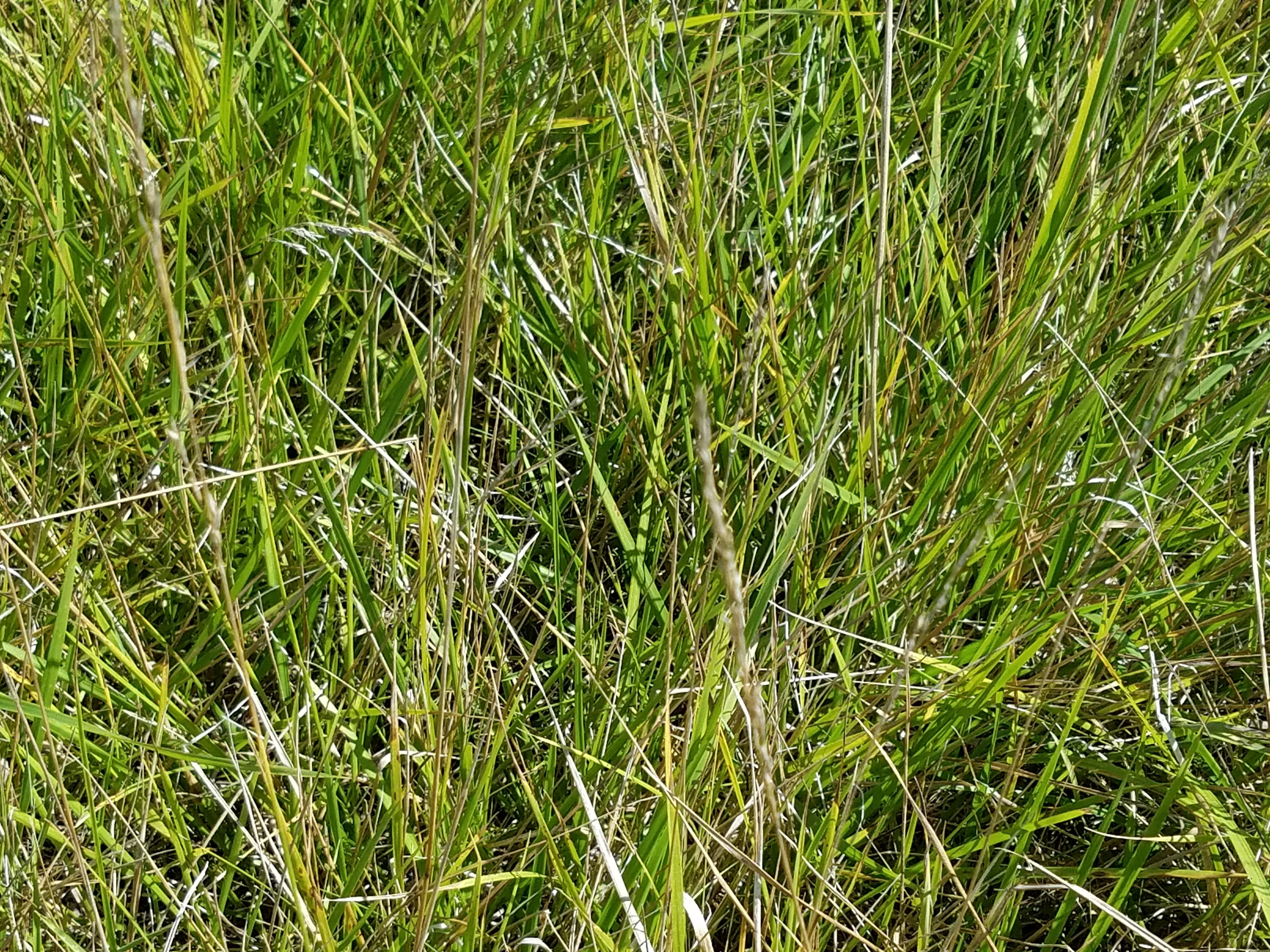 tall grass close up