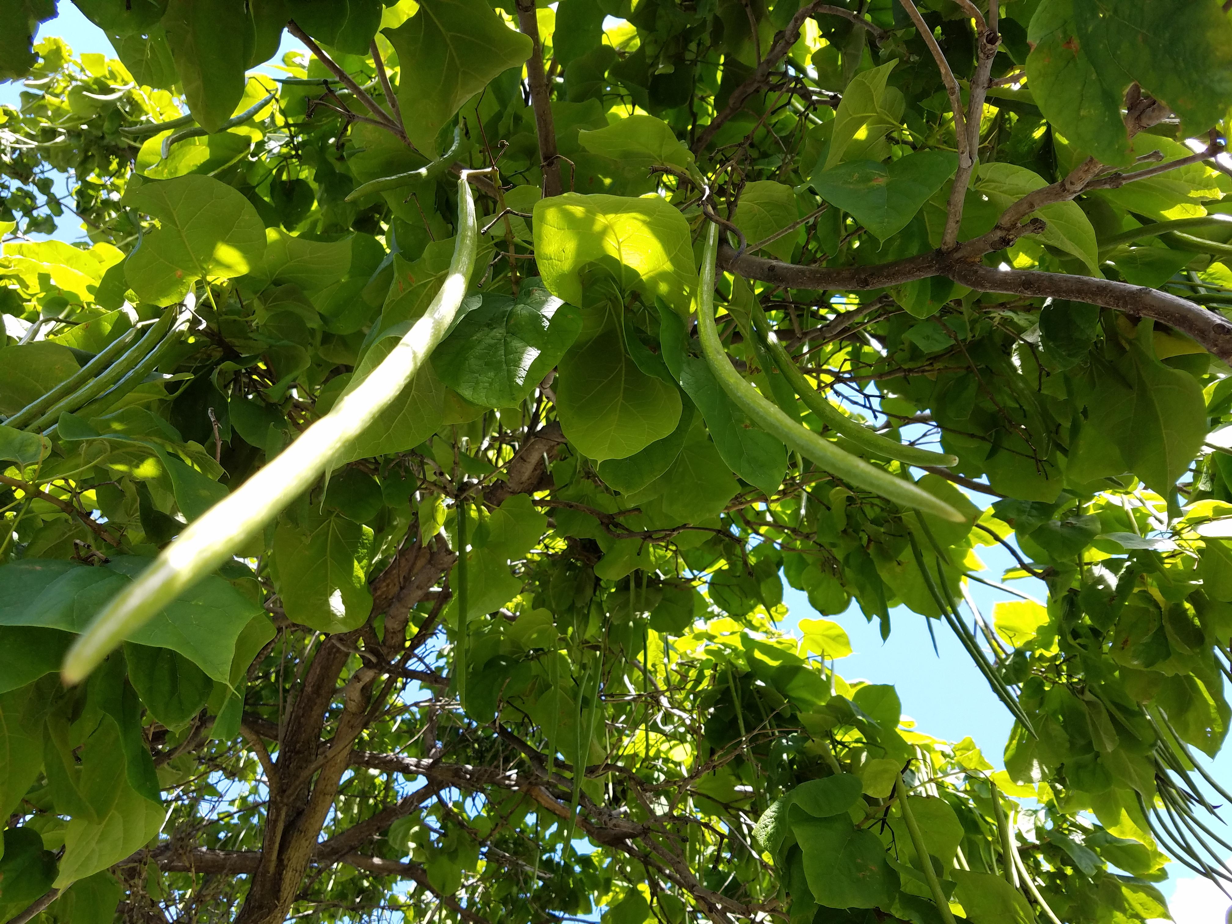 tree-seeds386.jpg