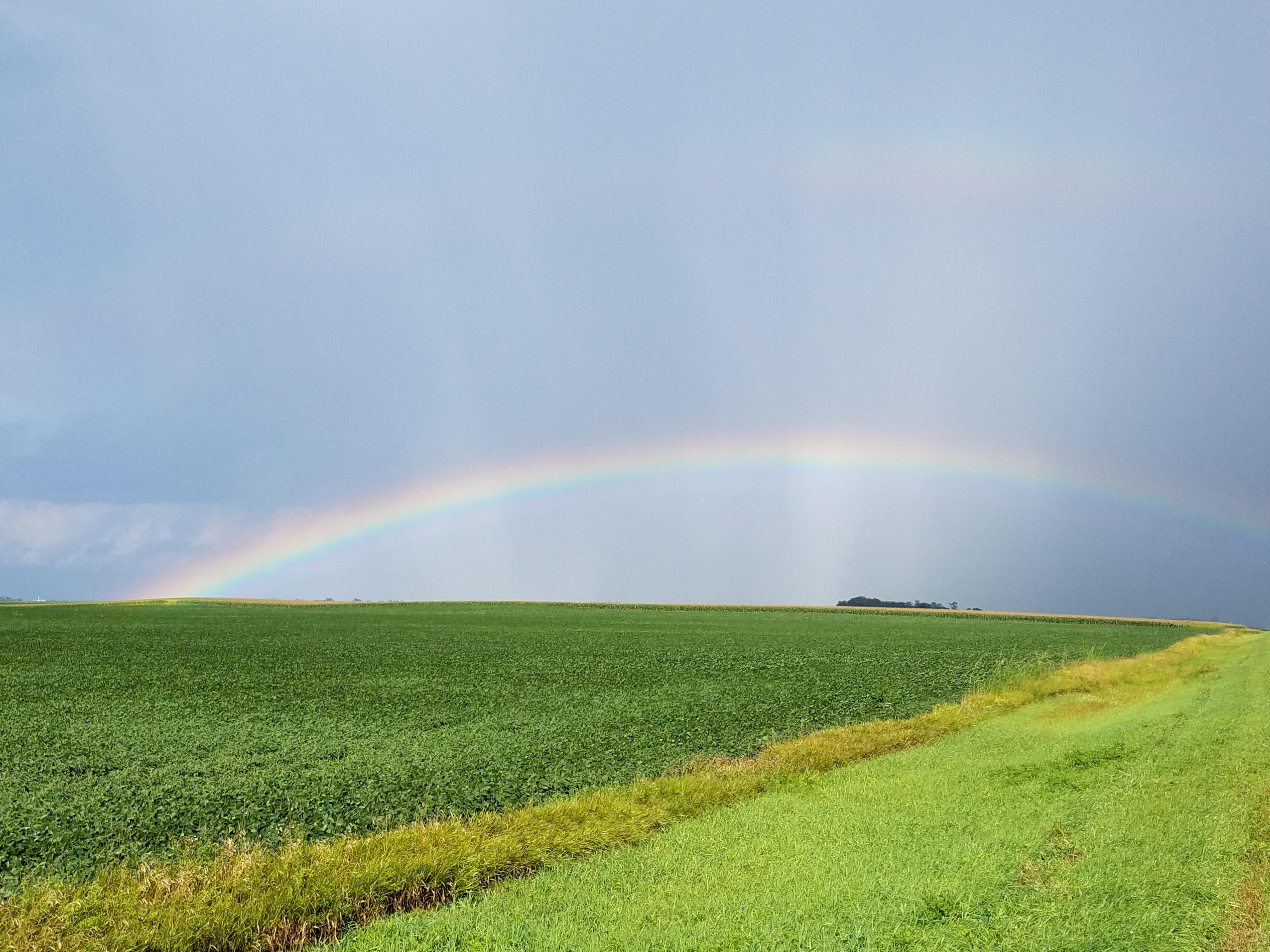 rainbow-beanfield-8023.jpg