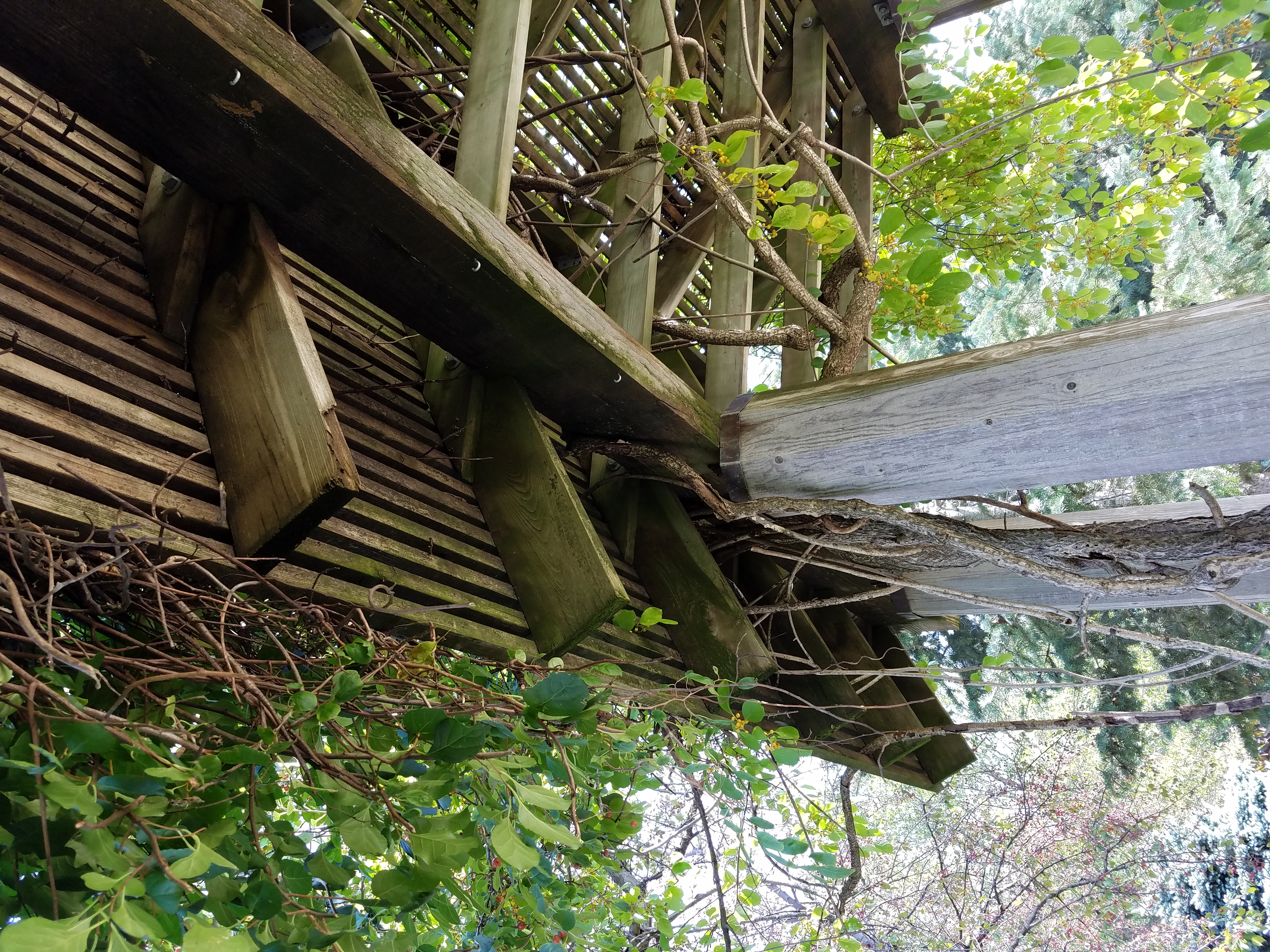 vines-on-a-trellis-638.jpg