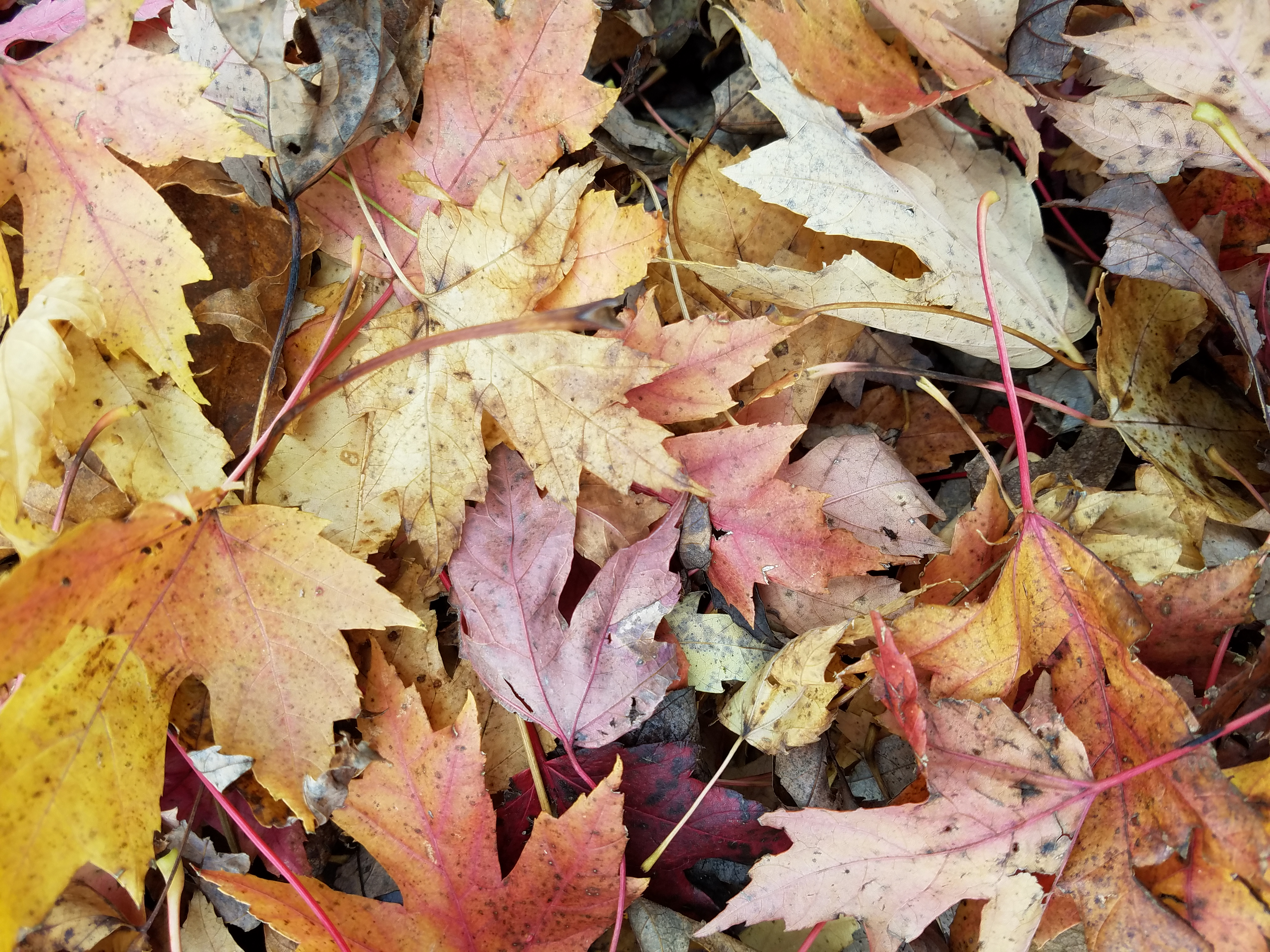 leaves-in-fall-287.jpg