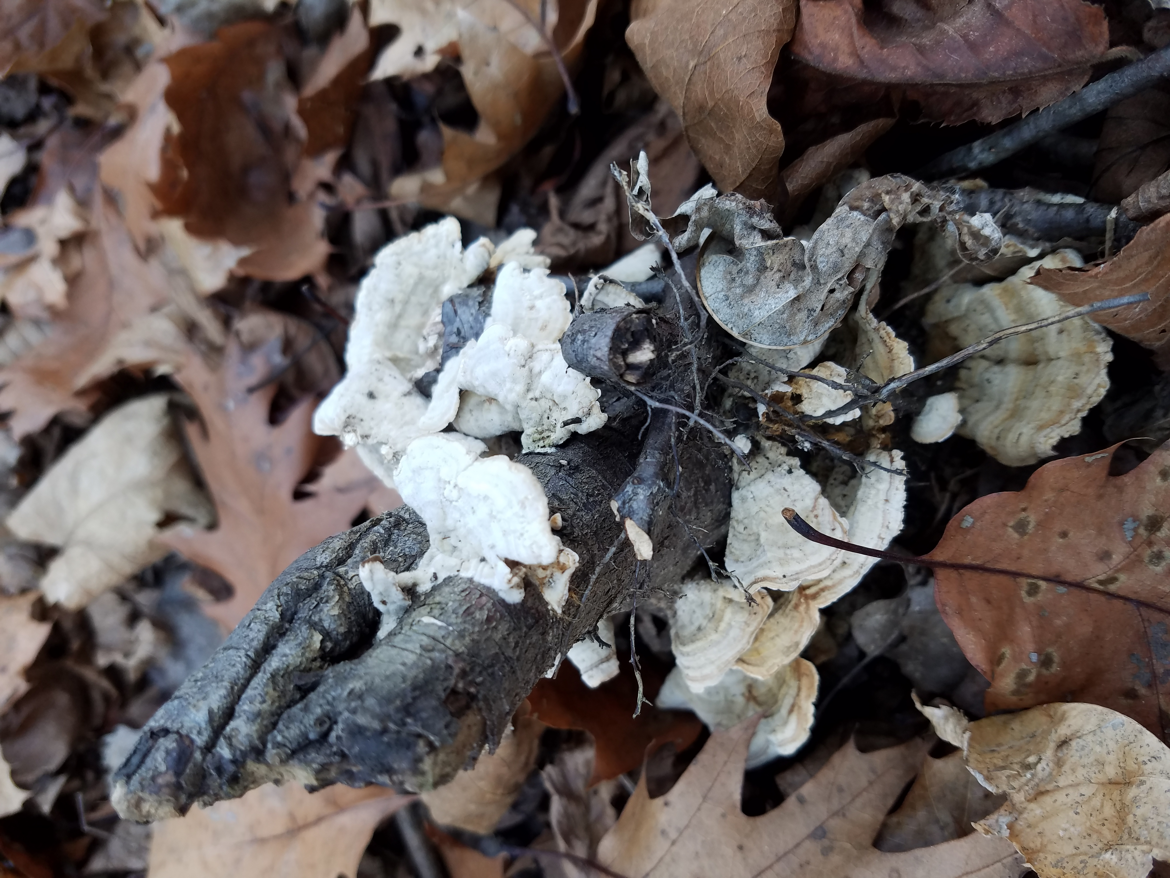 mushroom-on-a-stick-27.jpg