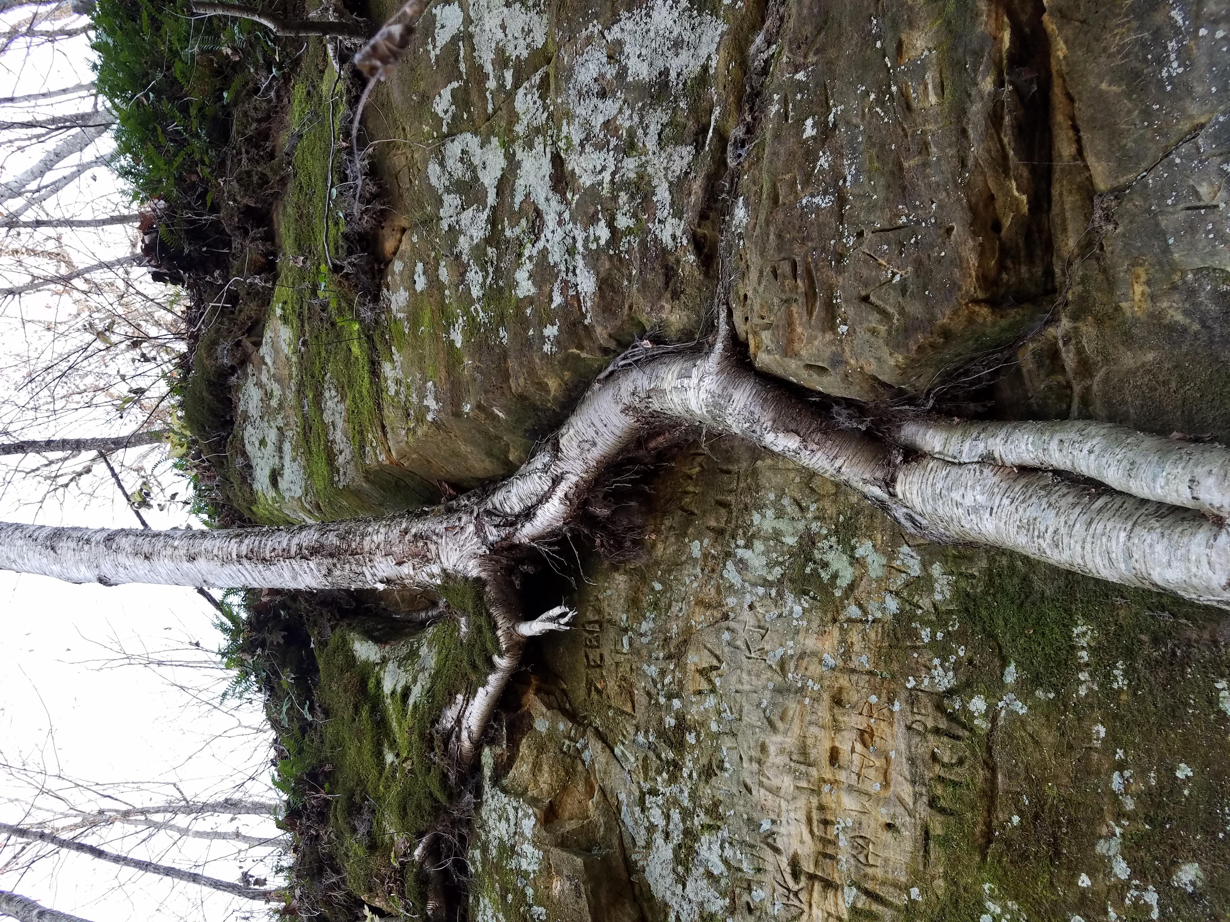 tree-root-in-stone-239.jpg