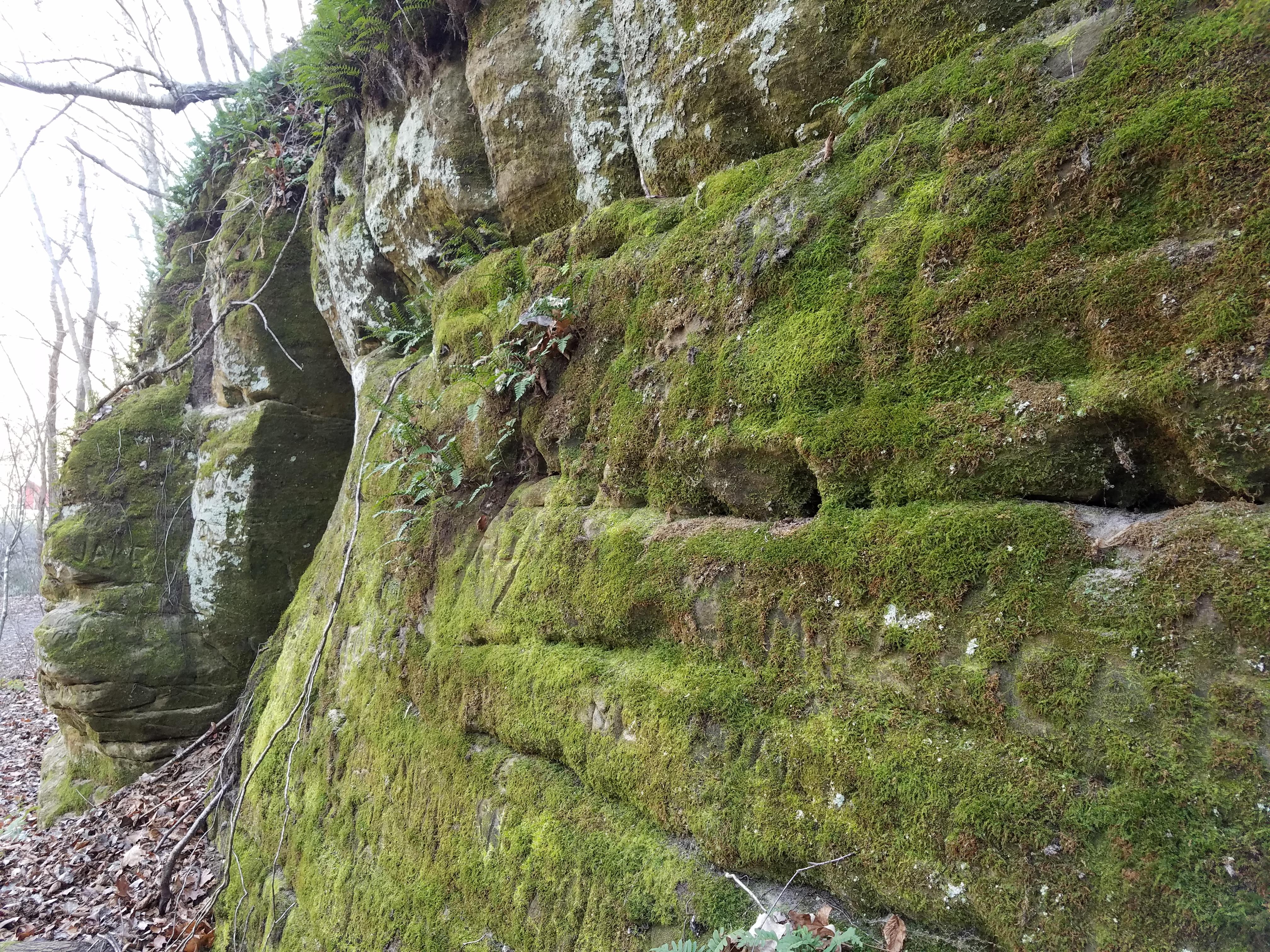 mossy-wall-184.jpg