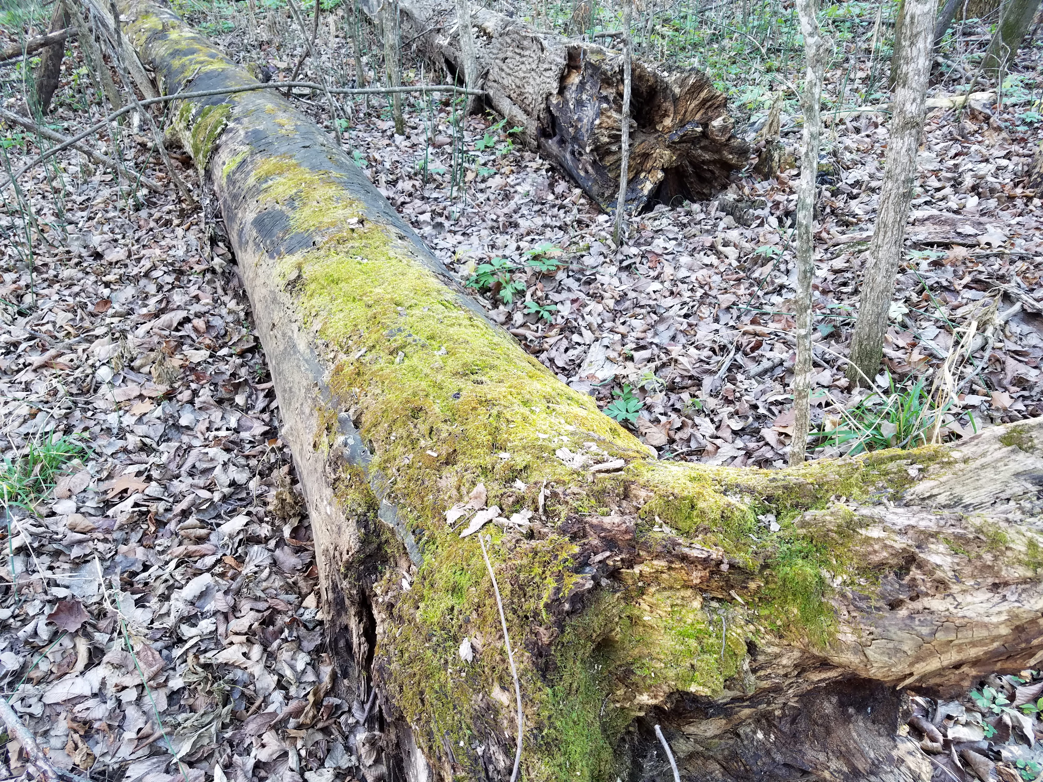 mossy-log-761.jpg